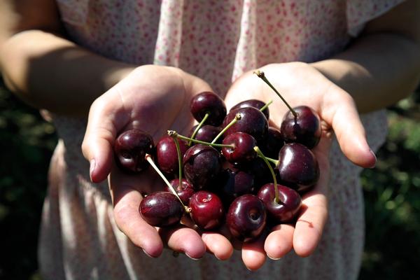 Christmas Cherries