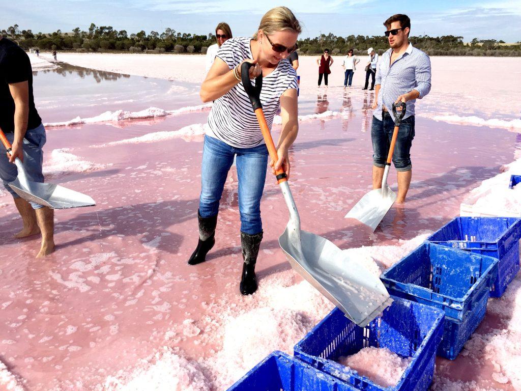 Pink Lake Salt Harvest